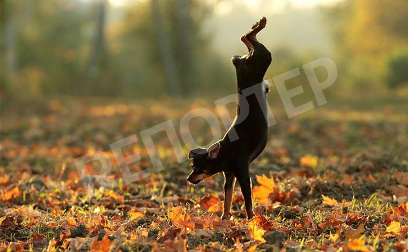 От холода запорожские собаки танцуют лучше цирковых