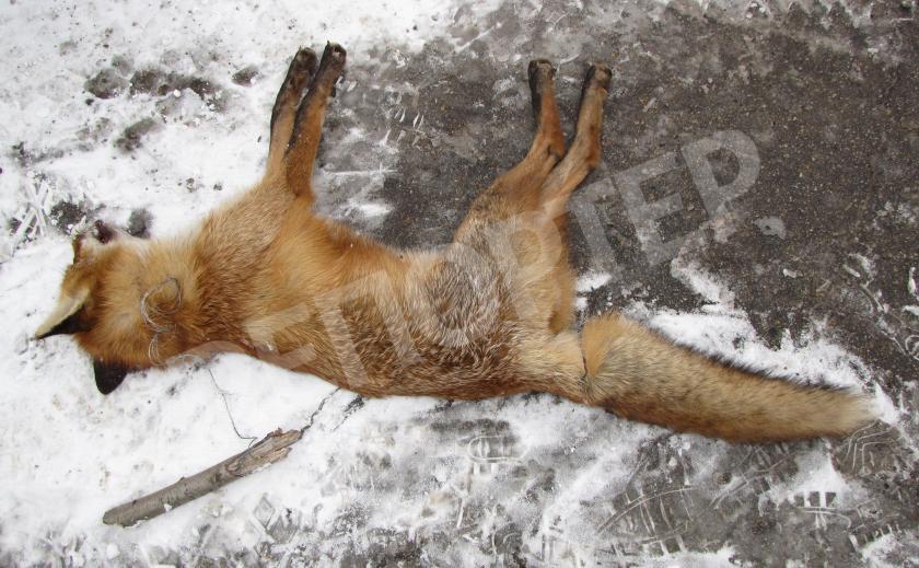 На Хортице от рук браконьеров массово гибнут животные
