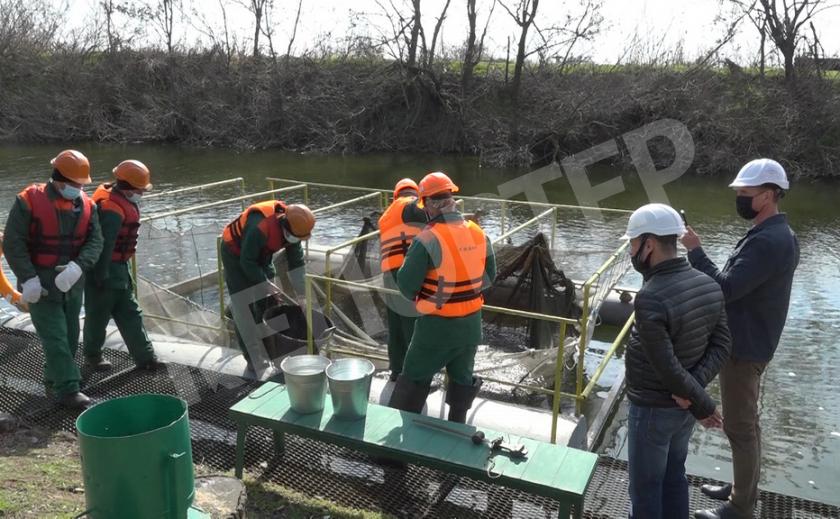 На запорожской атомной работают рыбы