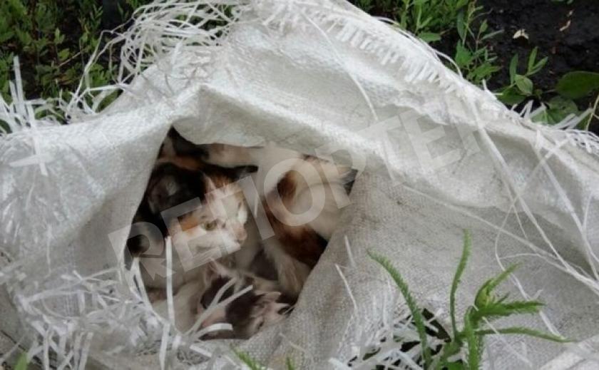 В Запорожье выбросили кота в мешке