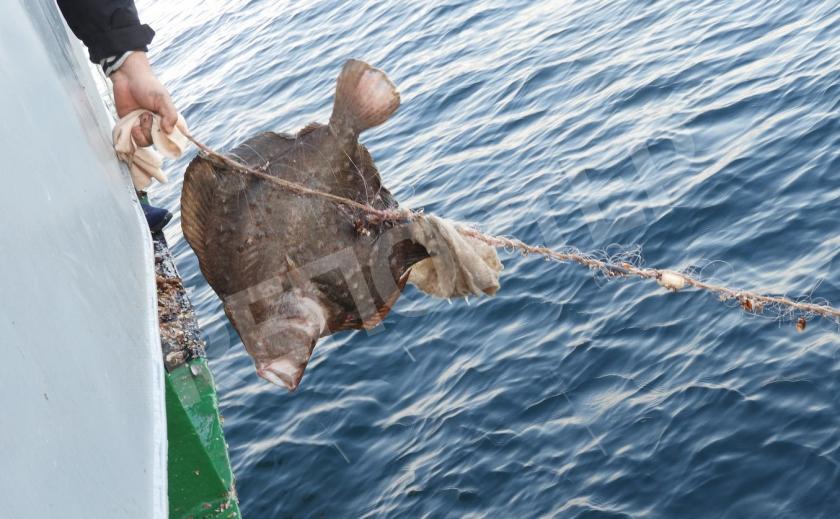 Под Запорожьем нашли 43 браконьерские сети