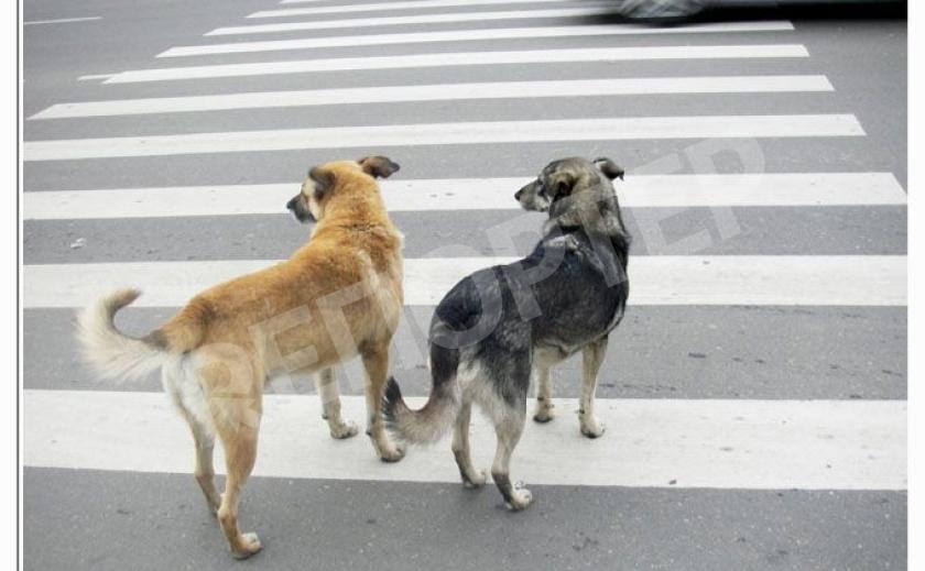 Запорожье собаки соблюдают правила дорожного движения