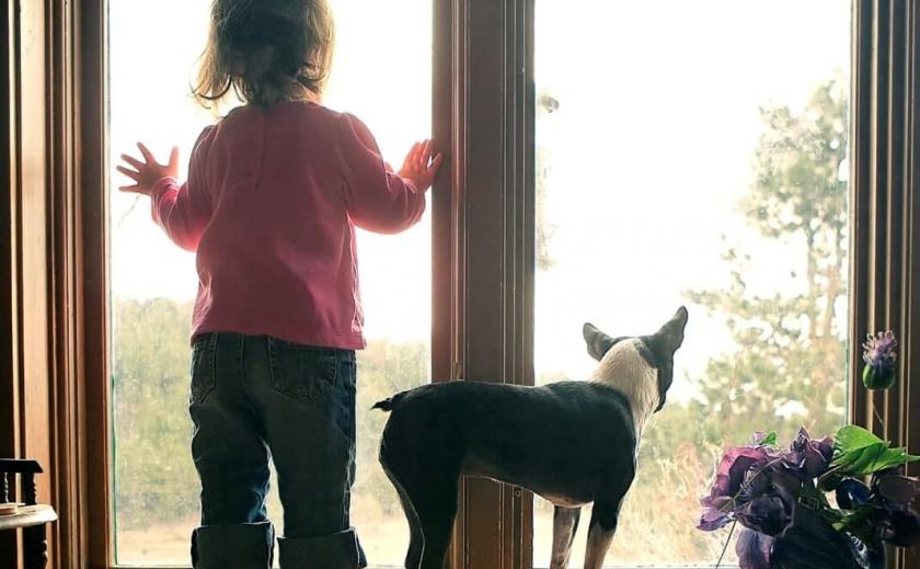 Чуть не упала: в Запорожье малышка застряла в окне на втором этаже