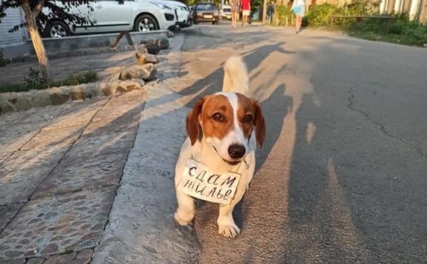В Бердянске появился пес-риелтор