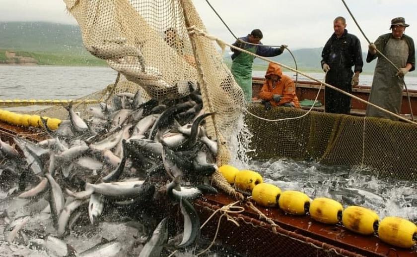 В Азовском море стартовал промышленный лов рыбы