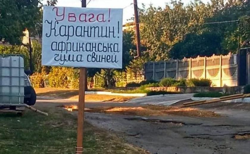 Африканская чума у свиней. В Запорожской области установили карантинно-полицейские посты