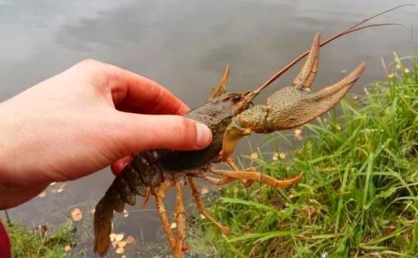 Рыбпатруль спас от браконьеров на Каховском водохранилище 2,3 тыс. раков