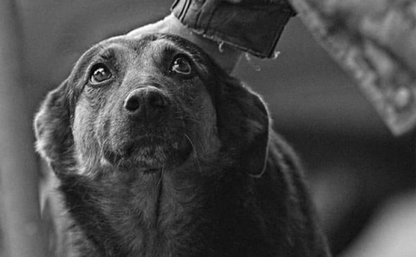 В Запорожской области живодер застрелил собаку на глазах у детей