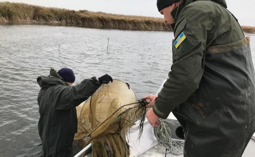 В Приазовском природном парке экологи спасли от браконьеров рыбу, занесенную в Красную книгу