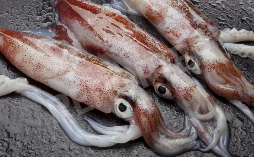 В меню запорожских атомщиков срочно введены кальмары и коктейли