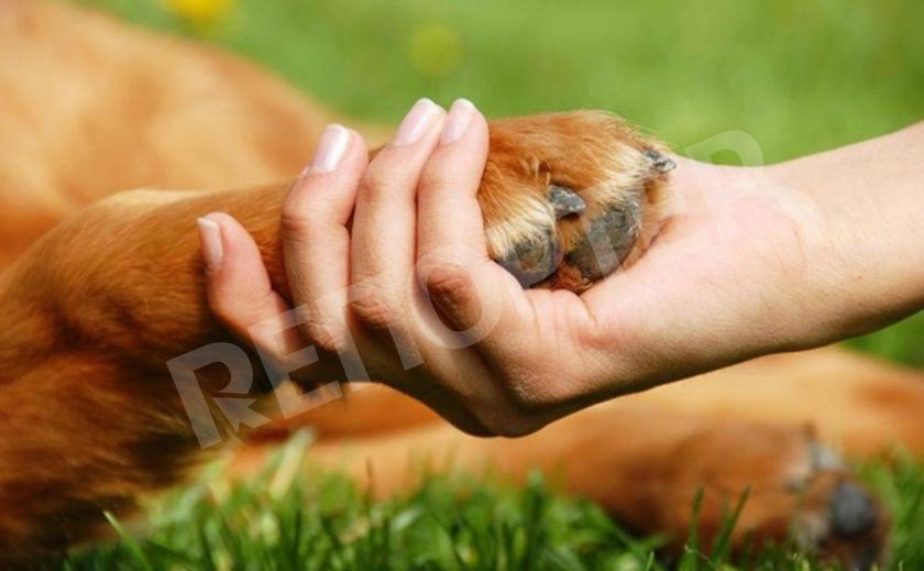 Запорожцев призывают помочь бездомным животным